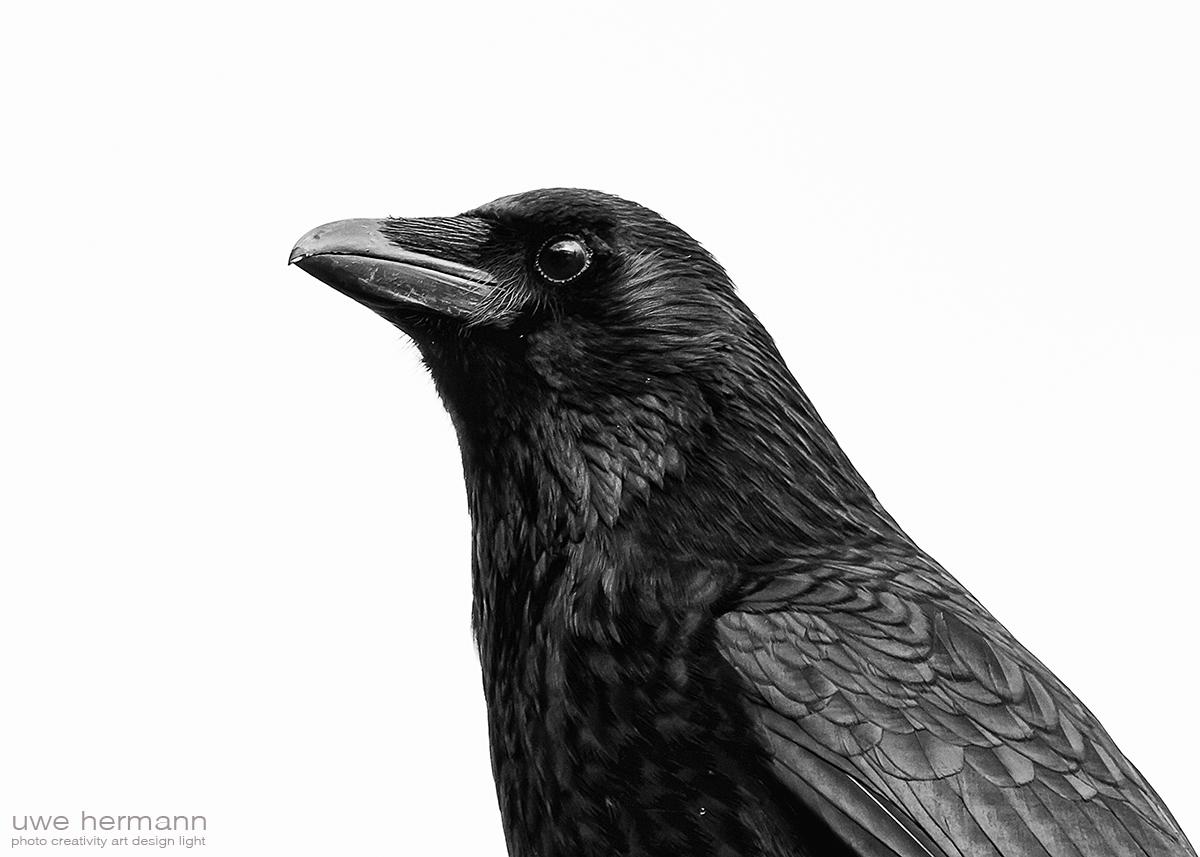 hermann|fotografie
